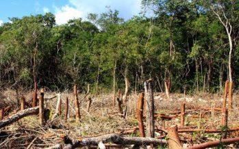 ¿Y los Recursos Forestales, QUÉ? Así arrasan con la riqueza verde