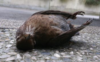 Muerte de miles de aves anuncian un cataclismo