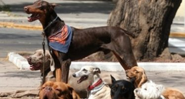 Alimentos caseros y golosinas causan graves daños a mascotas expertos