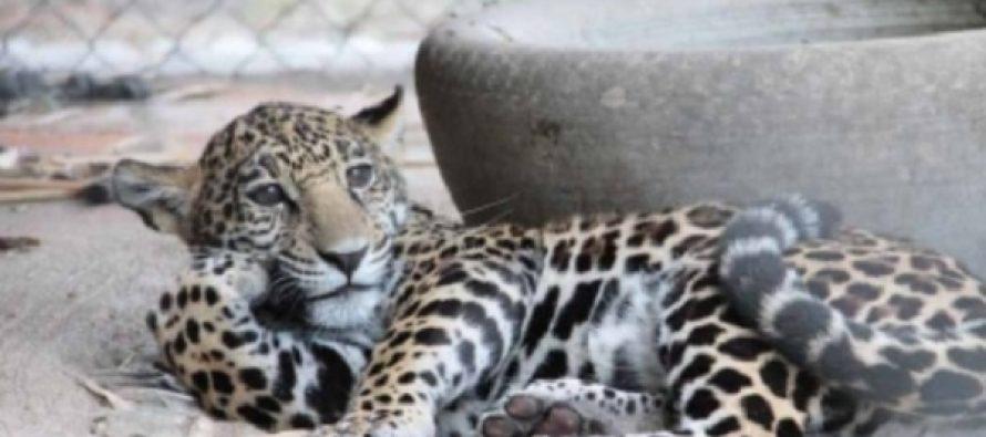 México avanza en combate a delitos contra la vida silvestre
