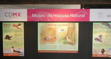 El murciélago y las comadrejas te dejarán un gran aprendizaje, ya que son la pieza del mes en el Museo de Historia Natural
