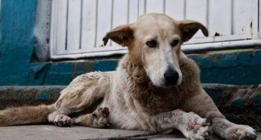 México, país con más perros callejeros