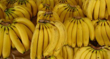Las bananas podrían enfrentar una posible extinción