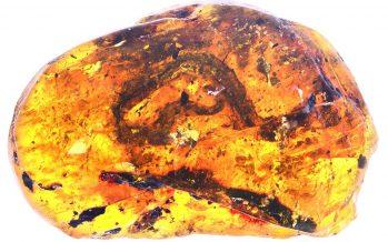 Hallan serpiente de 99 millones de años atrapada en ámbar