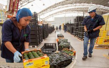 Agro mexicano exportó más de 1.4 millones de toneladas, en julio