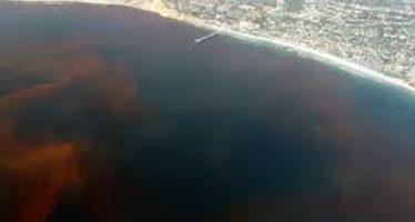 Marea roja causa muerte marina sin precedentes en Florida