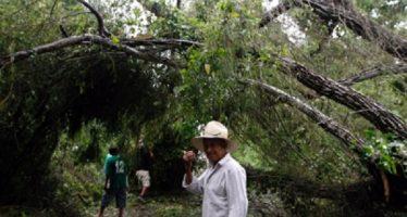 Cambio climático genera árboles más grandes, pero débiles